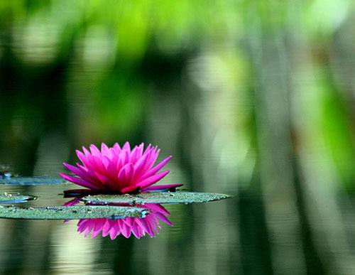 Water-Lilies-edit